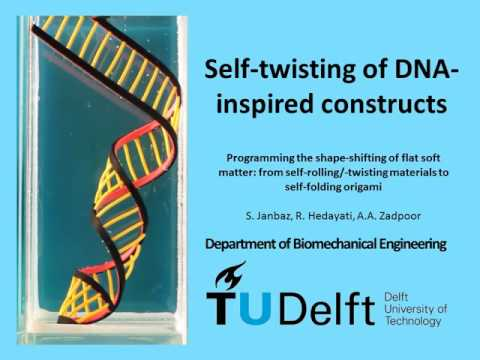 Self-twisting of DNA-inspired constructs, TU Delft, Prof Amir A Zadpoor