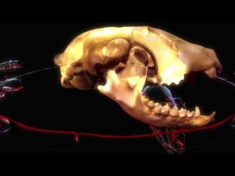 Interactive Skull Museum
