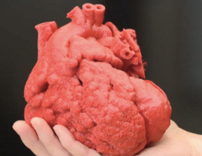 Wissenschaftler versuchen ein funktionierendes menschliches Herz aus ...