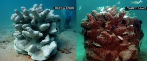 d-shape_coral