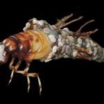 Klaus Leitl 3D druck insekten 3 150x150 - Detaillierte 3D-gedruckte Insekten von Klaus Leitl
