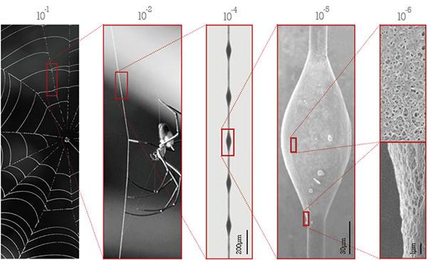 Spinnen Struktur 3D Druck