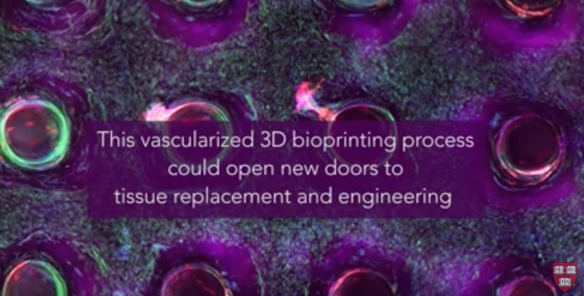 3D_bioprinting_vascular_tissue_harvard_university1