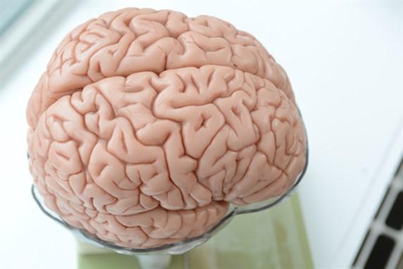 MESO-BRAIN Projekt: 3D-Druck von neuronalen Netzwerken des Gehirns ...