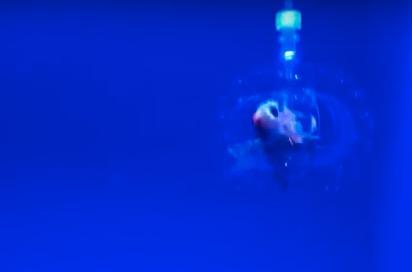 hydrogel robot fish - MIT Forscher stellen transparente Hydrogel-Roboter am 3D-Drucker her