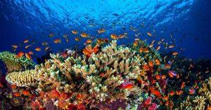 3D Druck great b reef korallen 300x157 - Forscher verwenden 3D-Druck um das Great Barrier Reef zu retten