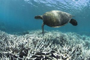 3D Druck great barrier Schildkr%C3%B6te 300x200 - Forscher verwenden 3D-Druck um das Great Barrier Reef zu retten