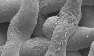 3D Bioprinting Eierst%C3%B6cke M%C3%A4use 3Druck 3 300x180 - Forscher testen Bioprint-Eierstöcke an Mäusen - Mit Erfolg