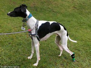 """Hundepfote Prothese 3D Druck 300x225@2x 300x225 - """"Druck mir einen neuen Fuß in 48 Stunden"""" 3D-Druck in der Medizin #1: Prothesen"""