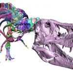 Trix T Rex 2 150x150 - Tyrannosaurus Rex Skelett mit 3D-Scan vervollständigt