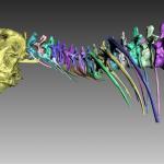Trix T Rex 3 150x150 - Tyrannosaurus Rex Skelett mit 3D-Scan vervollständigt
