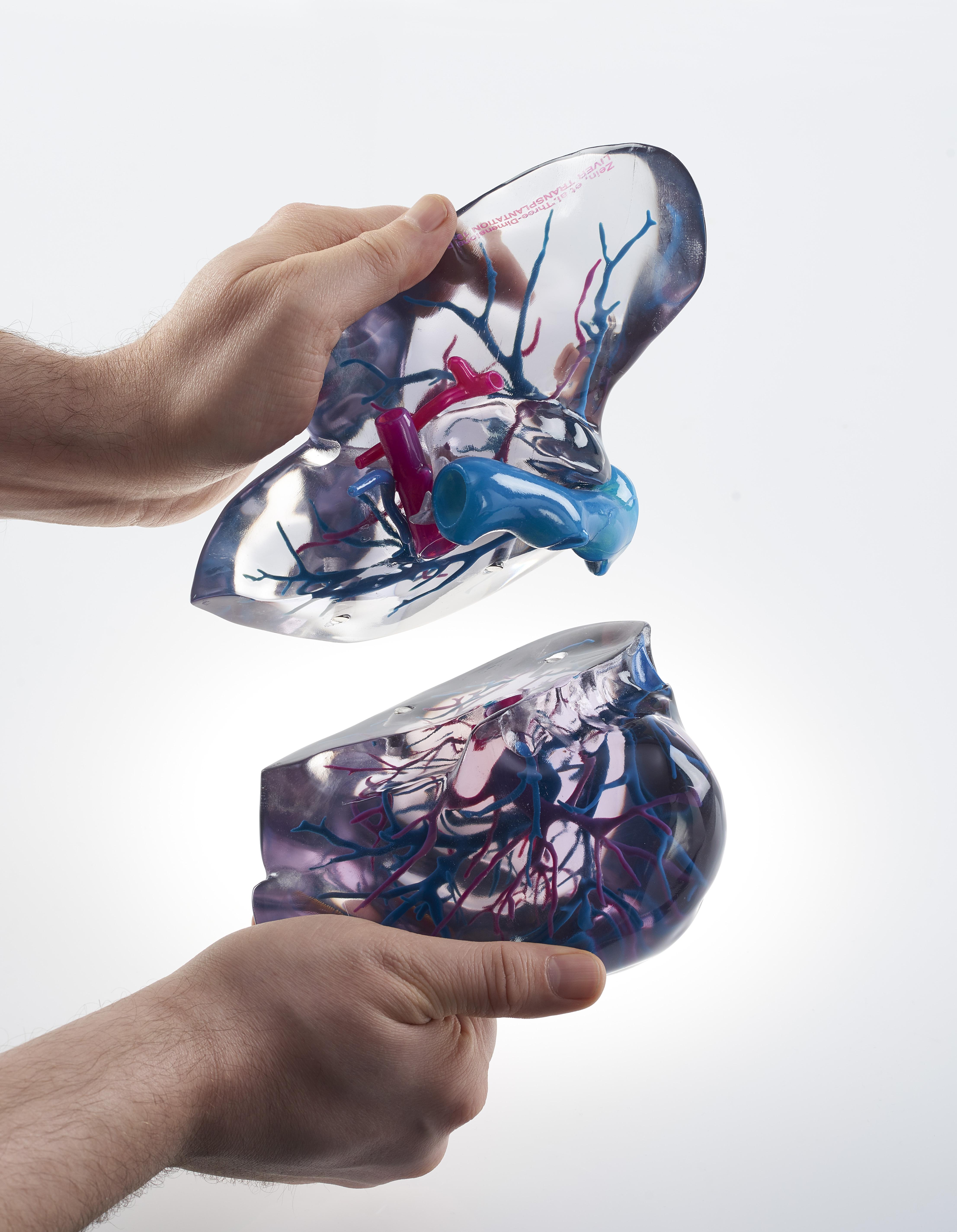 Fein 3d Anatomiemodelle Zeitgenössisch - Anatomie Ideen - finotti.info