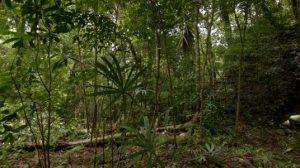 04 lidar maya.adapt .536.1 300x168 - 3D Laser Scan Technologie enthüllt Maya-Metropole im Dschungel von Guatemala