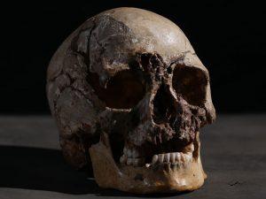 """cheddar man skull for web 300x225 - Dunkle Haut und helle Augen: 3D Druck Rekonstruktion des """"ersten Briten"""""""