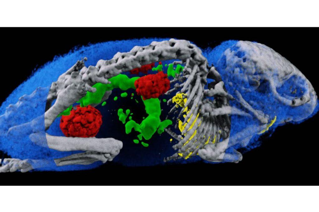 3d scan maus - Neuer 3D-Scanner könnte Röntgentechnologie revolutionieren