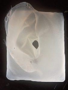 bakteriencellulose 3d struktur organe 226x300 - Einfache Methode zur Herstellung von 3D-Strukturen aus bakterieller Cellulose