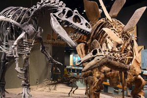 01 Artec 3D Stegosaurus und Allosaurus 300x200 - Detailgetreuer Scan eines zusammenhängenden Dinosaurierskeletts