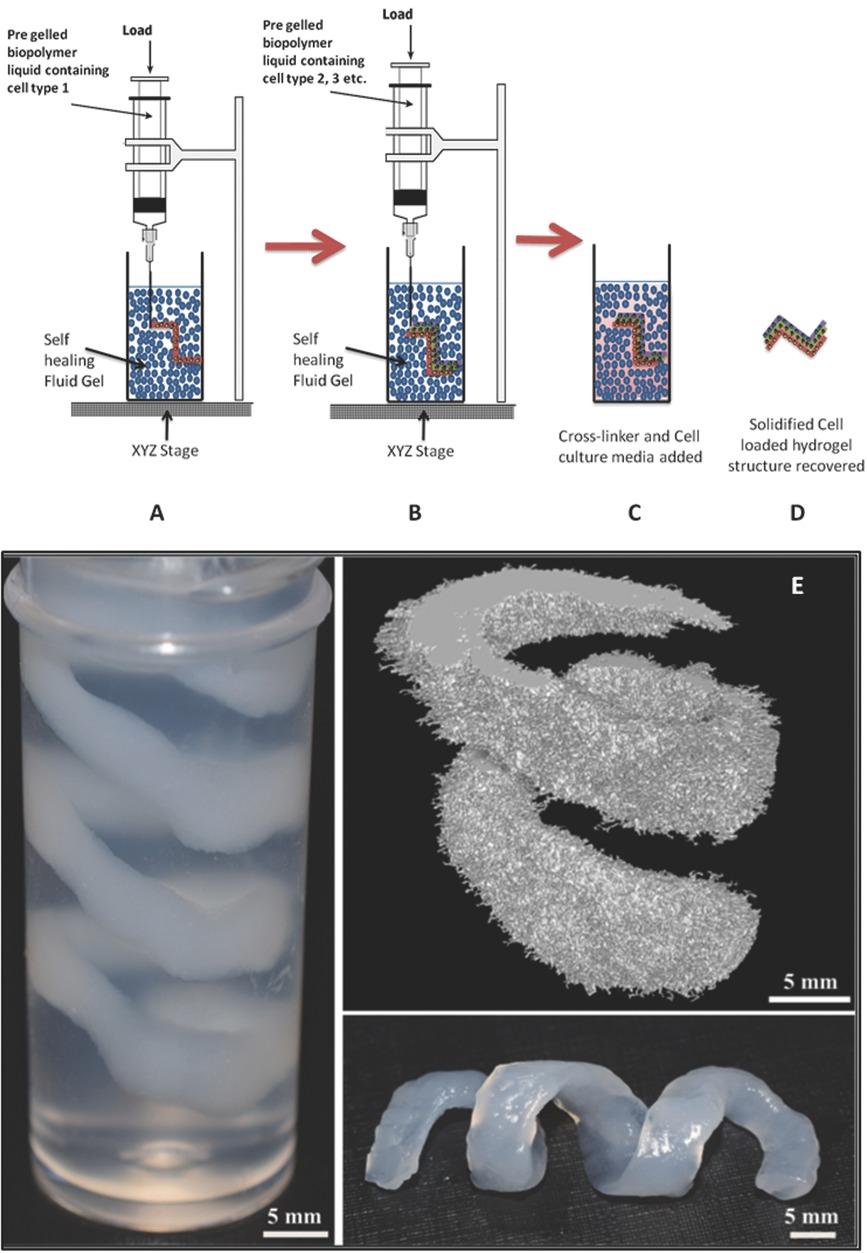 3D bioprinting fl%C3%BCssiges gel - Flüssiges Gel soll 3D-Bioprinting von weicheren menschlichen Organen ermöglichen