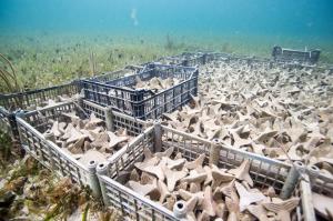 Front Korallen 300x199 - 3D-Drucksubstraten zur Restaurierung von Unterwasserkorallen