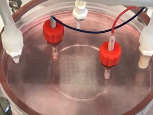 Gewebedruck e1530163327945 - Erstmals erfolgreich Herzgewebe 3D gedruckt