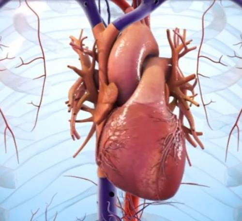 Erstmals erfolgreich Herzgewebe 3D gedruckt - 3Druck.com