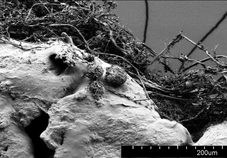 Kai Parthy launcht neues biologisch abbaubares Filament GROWLAY3 - Kai Parthy launcht neues biologisch abbaubares Filament GROWLAY