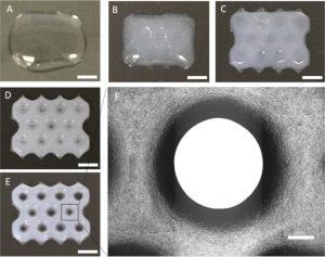 Biotinte gedruckte struktur 300x237 - Neue Bioprint-Tinte aus Alginat- und Zellulose-Nanokristallen