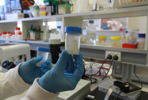Knorpel 1 e1533674882394 - Krokodilknorpel und menschliche Stammzellen zum 3D-Drucken von Gelenkknorpel