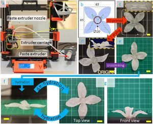 3D Druck setup 300x242 - UK Forschungskooperation entdeckt 4D-Druckpotential von Zellulose