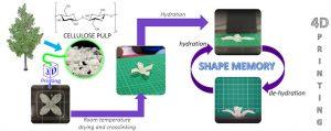 4D Druck 300x119 - UK Forschungskooperation entdeckt 4D-Druckpotential von Zellulose