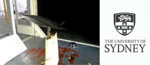 Hyperschallflugzeug Modell 300x130 - Sydney Forscher druckt Hyperschall-Flugzeugmodelle für den Test von Langsamwindkanälen