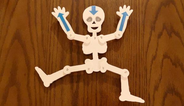 3D-gedrucktes Skelett