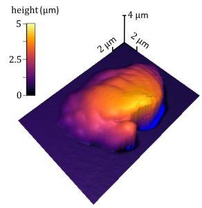 NIST Methode 292x300 - Die neue NIST-Methode misst die 3D-Polymerverarbeitung präzise