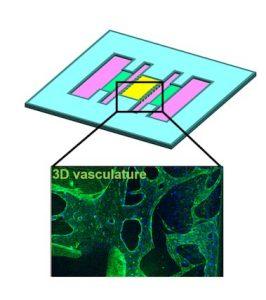 3D gedruckte Atemwege Auf Chip 266x300 - Forscher aus Korea haben 3D-gedruckten Atemweg-auf-Chip für Simulationen vorgestellt